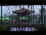 河南省洛陽市牡丹花盛開景象