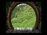 台灣最高山茶園