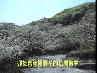 < 前一部影片: 慢開梅花迎接春節