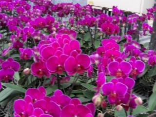 金車蘭花展