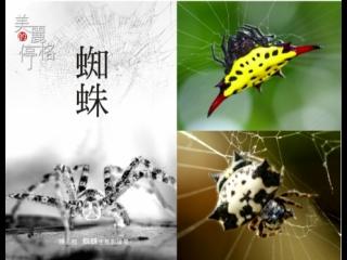 美麗的停格.陳玉枝.蜘蛛生態攝影作品
